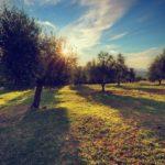 classificazione degli oli di oliva - Natyoure - www.natyoure.it